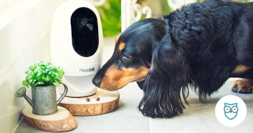Best Pet Cameras for Watching Your Pets
