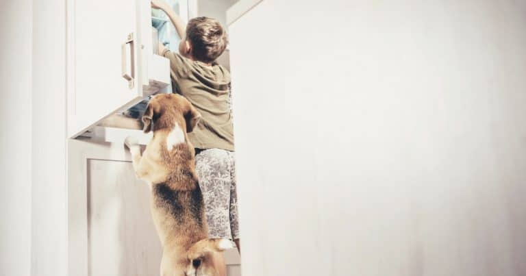 Best Pet-Friendly Home Security Systems