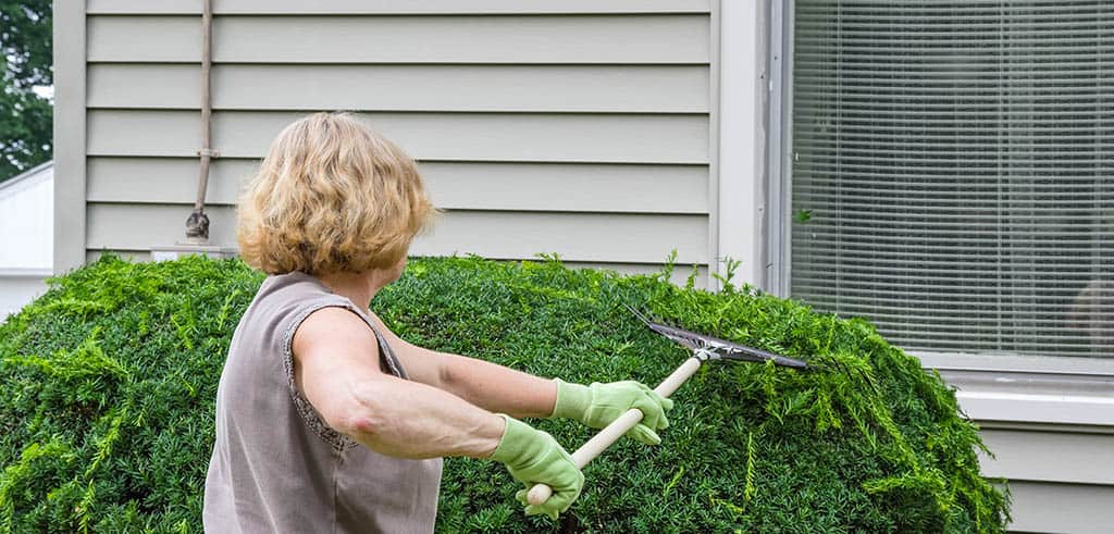Maintain your shrubs and bushes