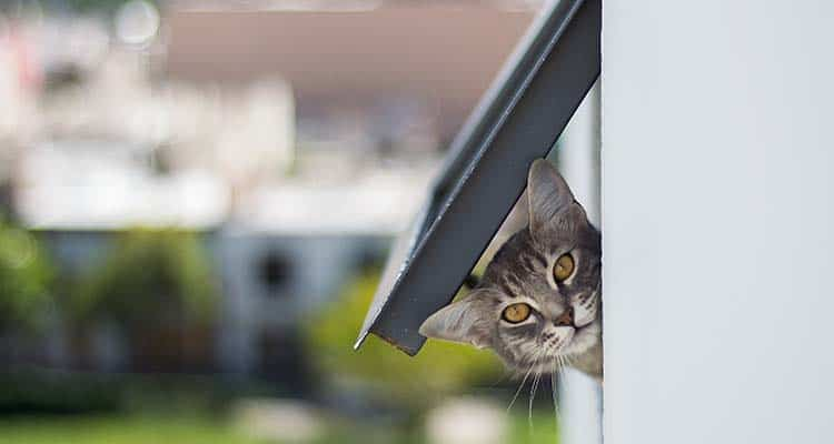 Cat in a doggie door | Home security