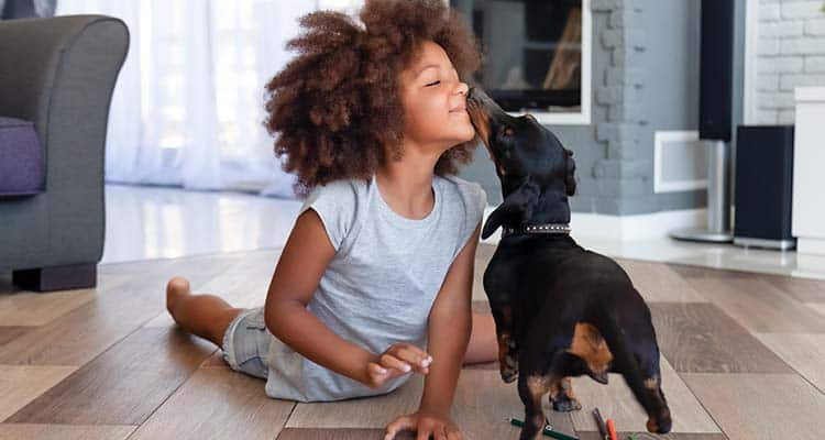 Home security protecting pets, family and home