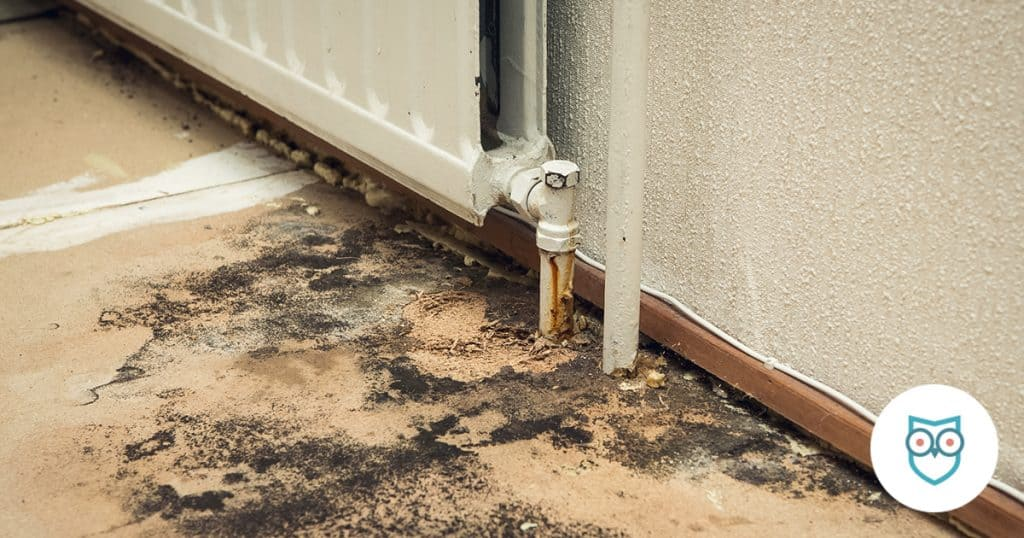 SafeWise Guide to Black Mold