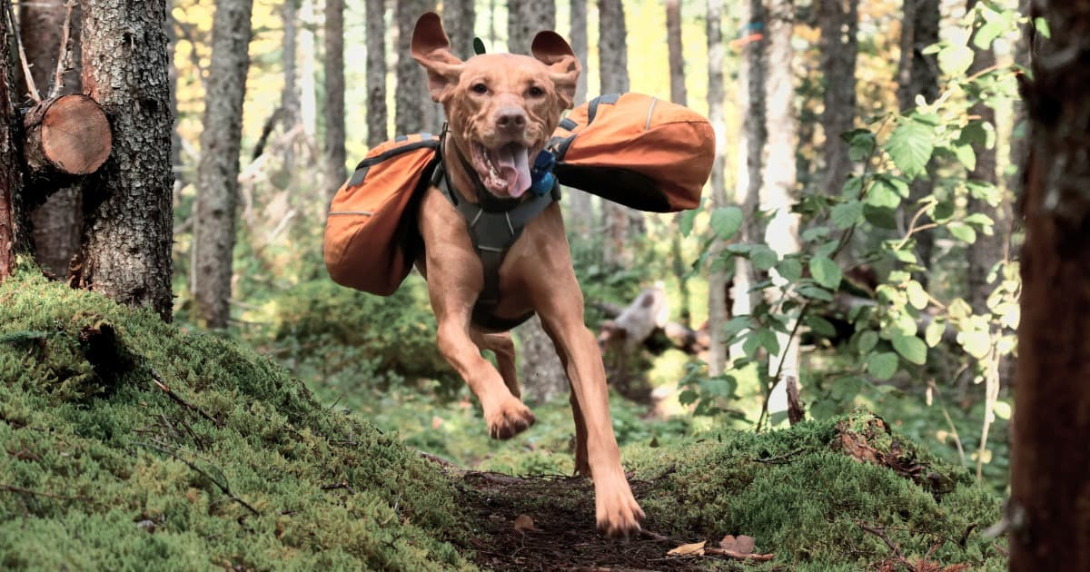 Best Outdoor Gear for Dogs of 2020