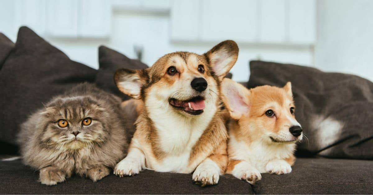 Interact With Your Pet Throughout the Day with a Pet Cam