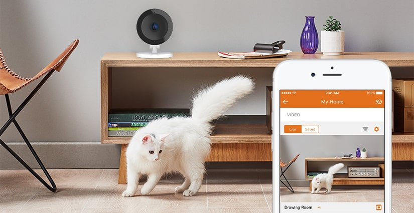 keeping an eye on your pets even if you are away from home cornerstone protection