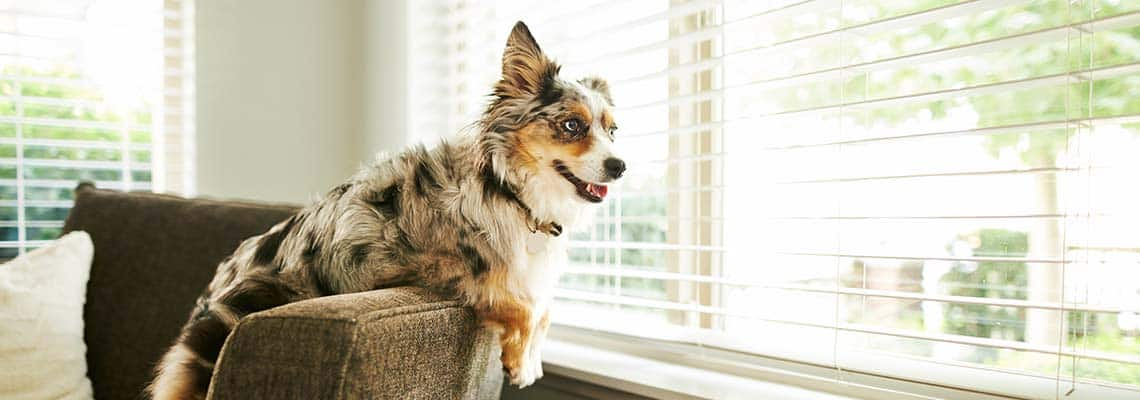 Home Security Systems for Pets